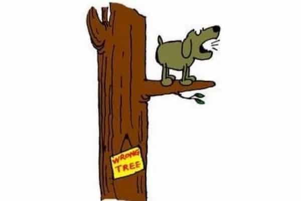 Bark up the wrong tree